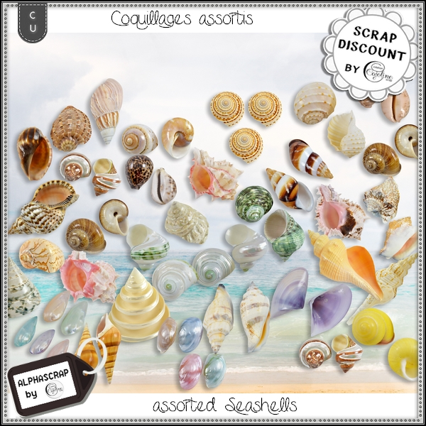Coquillages - assortiment