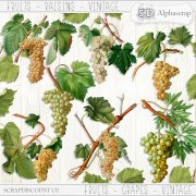 Fruits - Grapes - Vintage 1