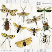 Insects - Vintage 1