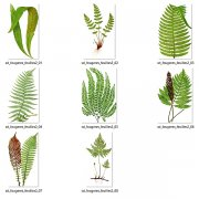 Ferns - Leaves - Vegetation 2