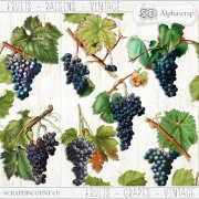 Fruits - Grapes - Vintage 2