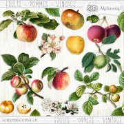 Fruits - Apples - Vintage 1