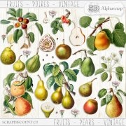 Fruits - Poires - Vintage 1