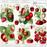 Fruits - Strawberries - Vintage