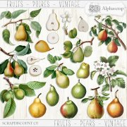 Fruits - Pears - Vintage 2