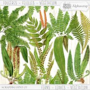 Ferns - Leaves - Vegetation 1