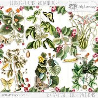 Old botanical illustrations