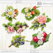 Berries - Flowers 3