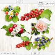 Berries - Flowers 1