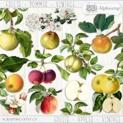 Fruits - Apples - Vintage 2