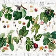Fruits - Figs - Vintage 2